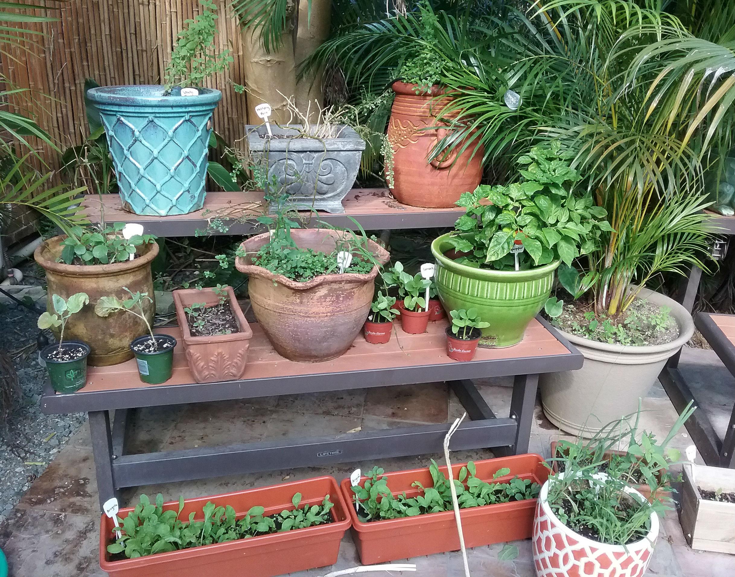 Herb Garden Cropped.jpg