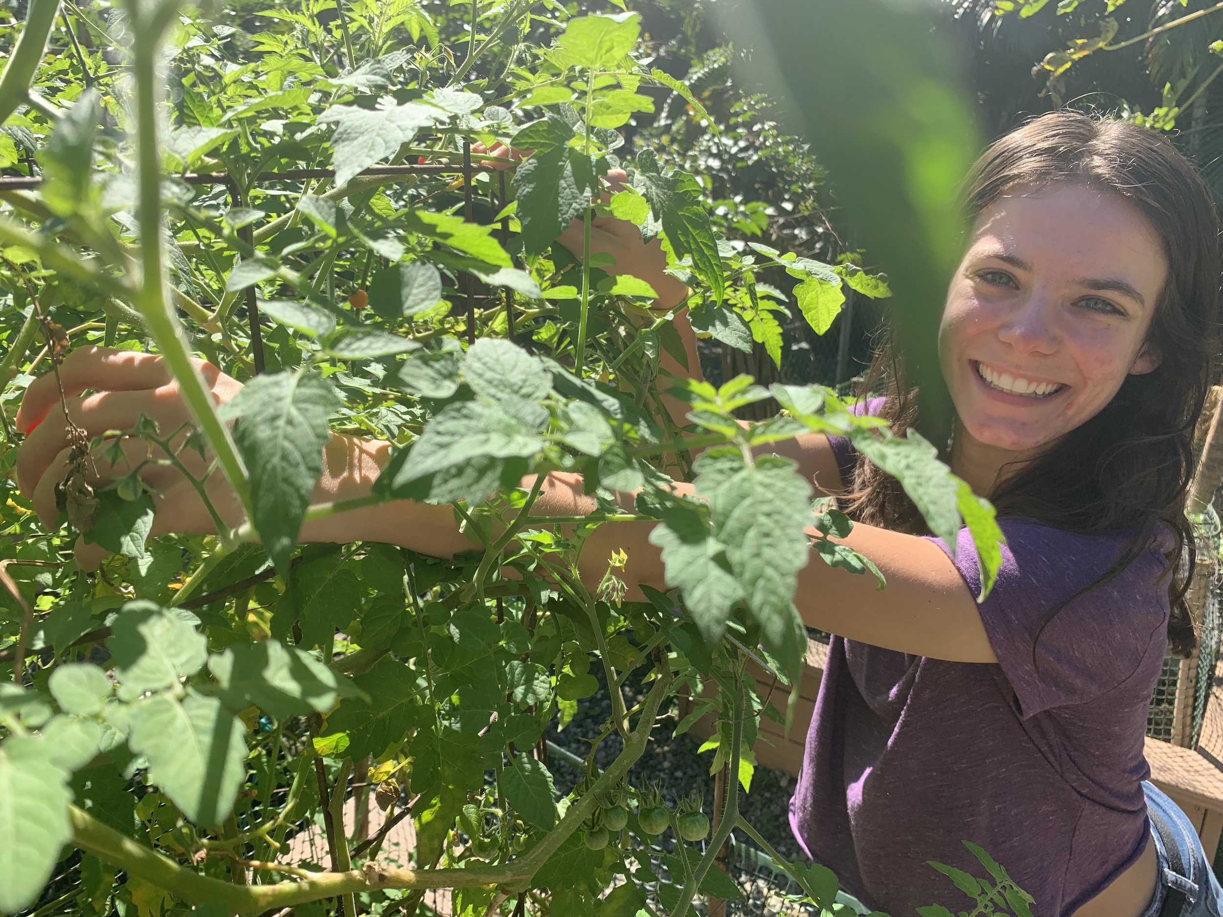 Our interns are welcome to use any of the tropical fruit and produce grown here on the property for their own meals!