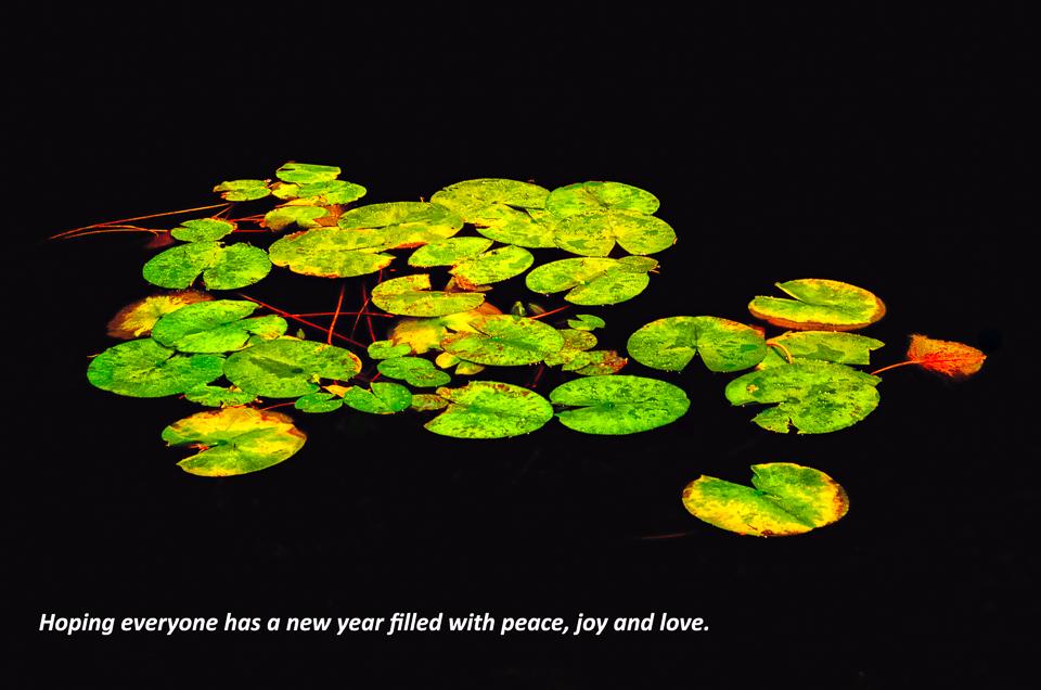 ©dorevorum,photographyOR&WA-1306-Edit-Edit.jpg