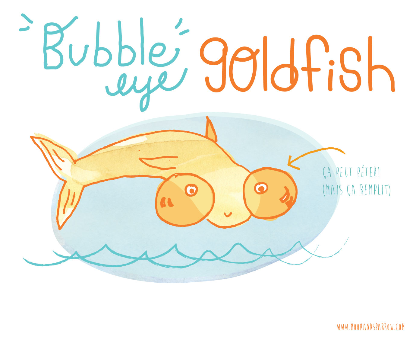 Bubble Eye Gold Fish