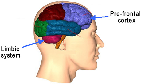 Parenting Coach in Palo ALto Brain Image