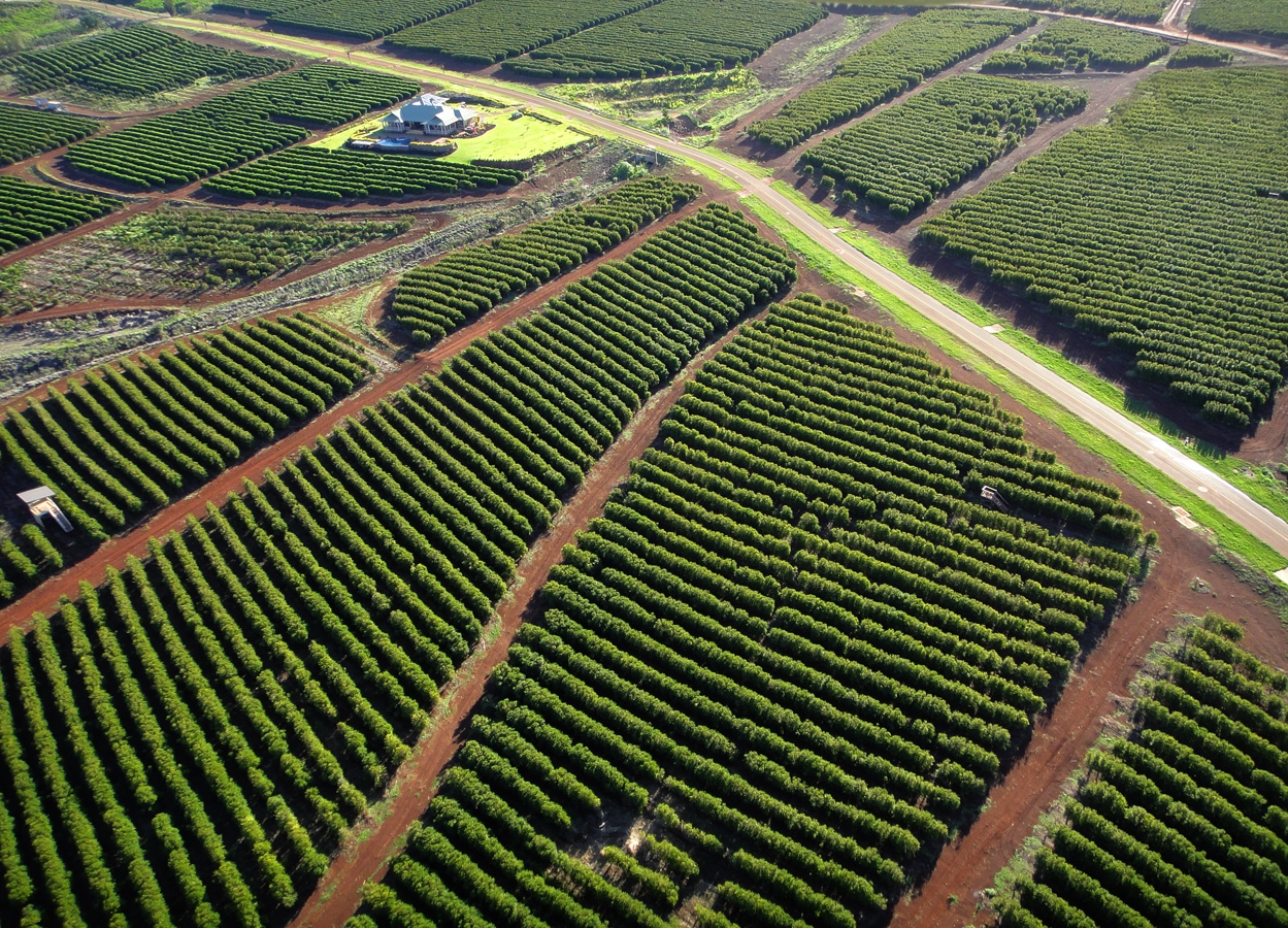 MauiGrown Coffee's four coffee varieties are estate grown and harvested on 500 acres on the slopes of the West Maui Mountains.  Photo by: Paradise Aerial Photography