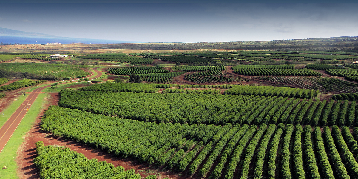 coffee-farm-orchard.jpg