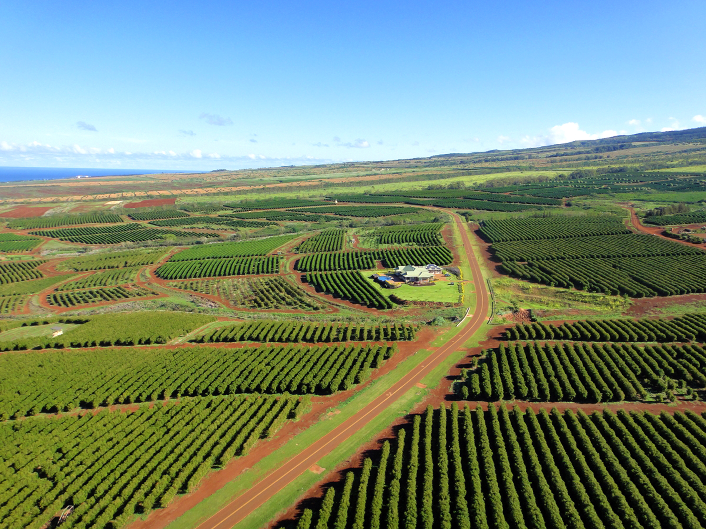 Kaanapali Coffee Farms is a true agricultural community located just four minutes from the Kaanapali Beach Resort. Today, only 12 estate lots remain.  Photo by: Randy Miller