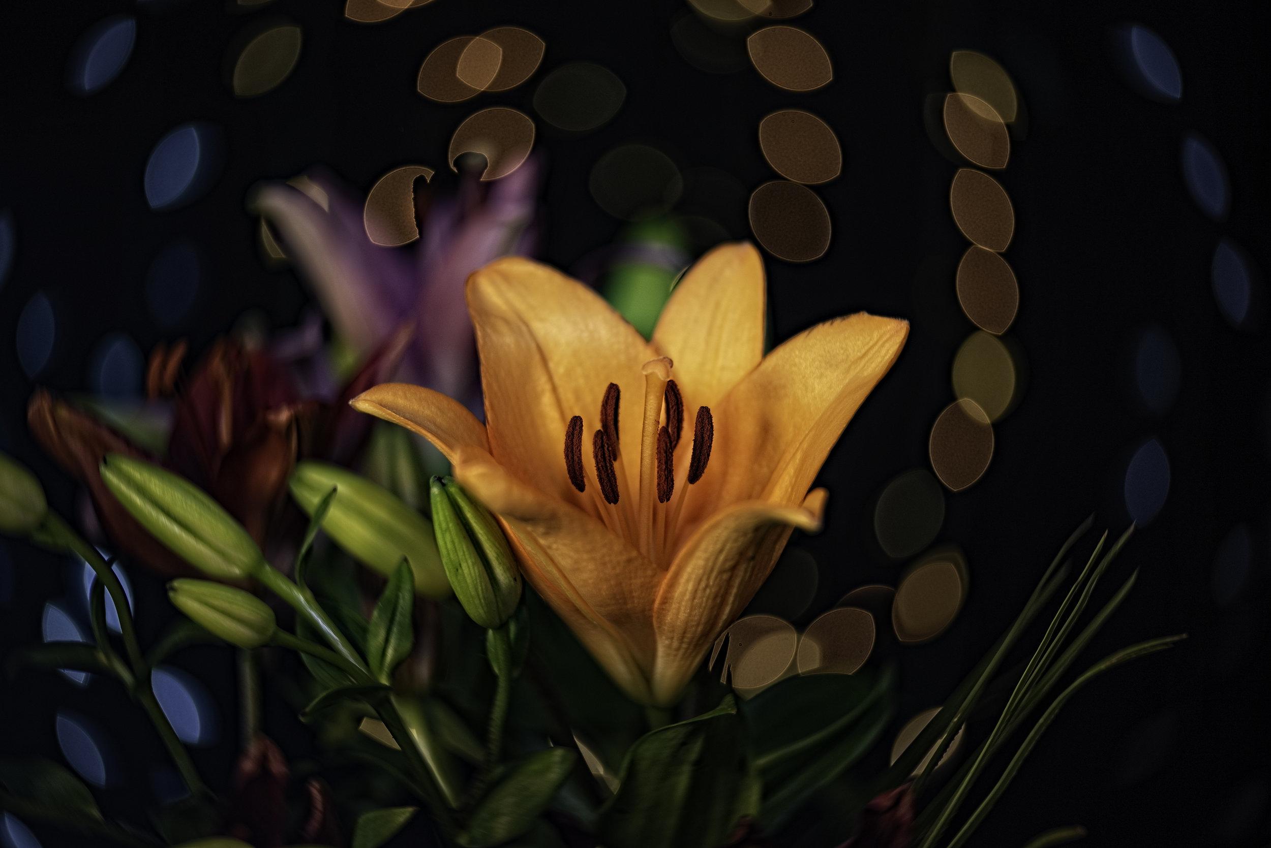 Lily Glow2.jpg