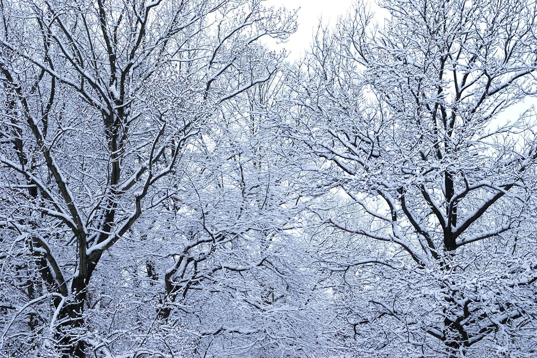 Snow!  | Springfield, Virginia
