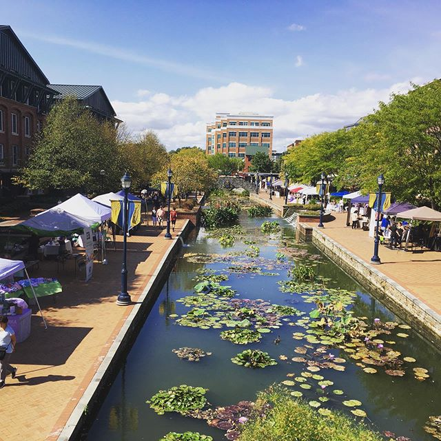 The @thebirthingcircle 's 2019 Birth and Babies fair is underway 12-5 on Carroll Creek.  One of the last events of the year for us.  #beautifulday