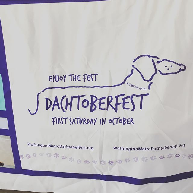 That's right @wmdachtoberfest a celebration of all things #dachshund There is a lot of cuteness walking around the fairgrounds right now!