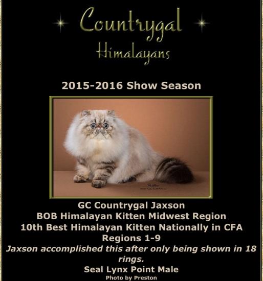 GC Countrygal Jaxson (grandson)