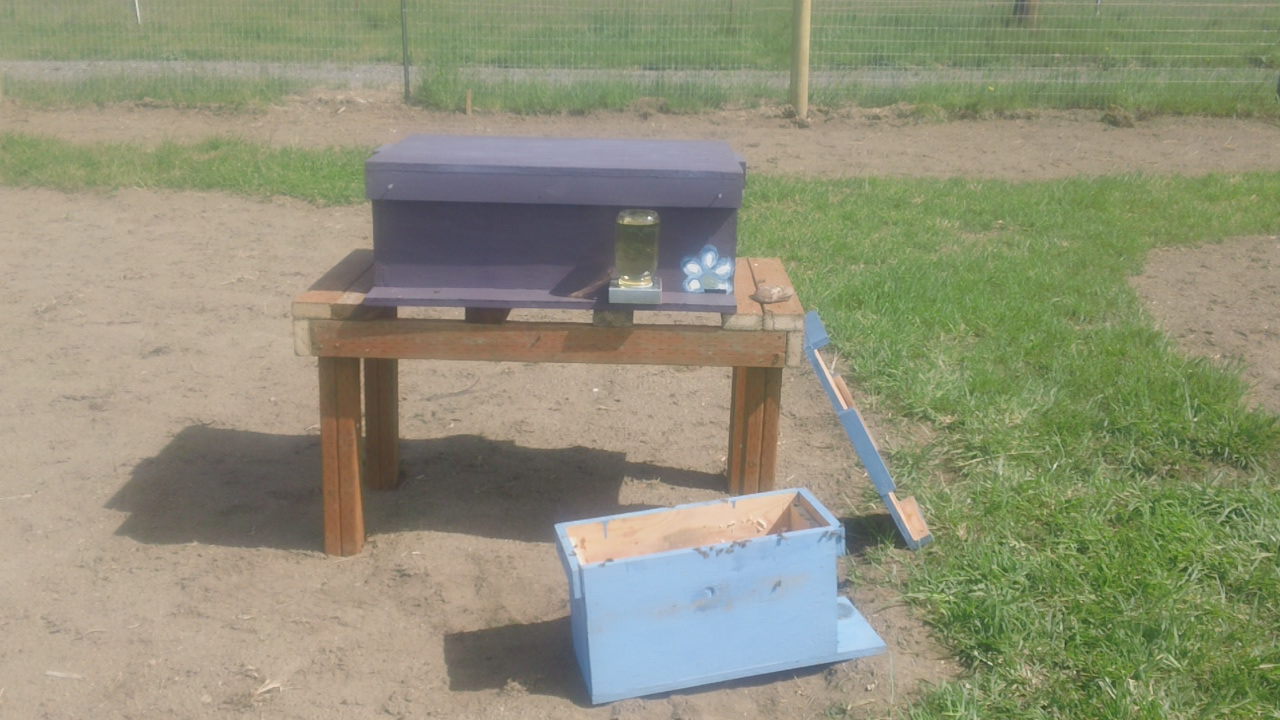 Beeatrice and here new hive after relocating from the nuc box.