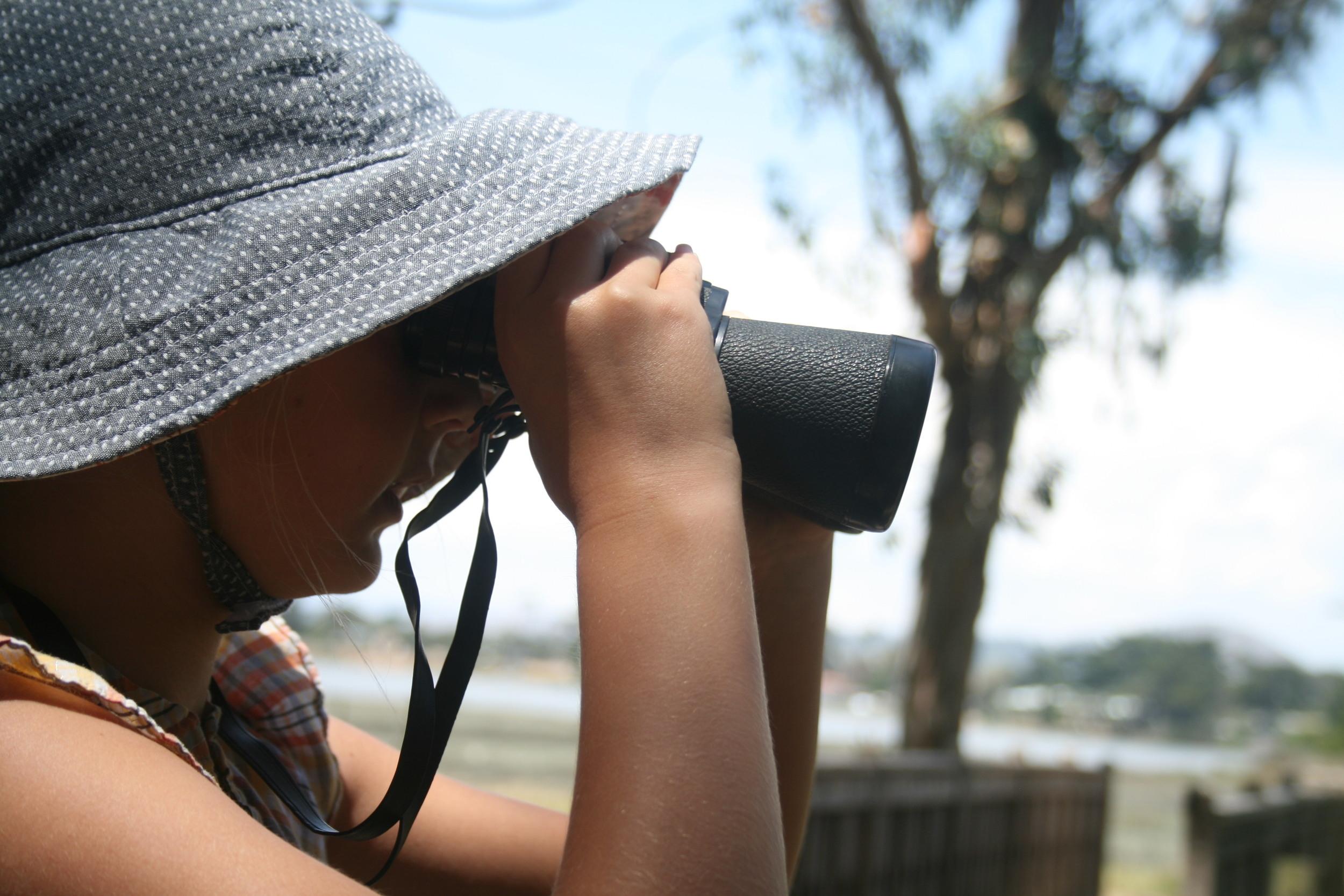 birdwatching for homeschool