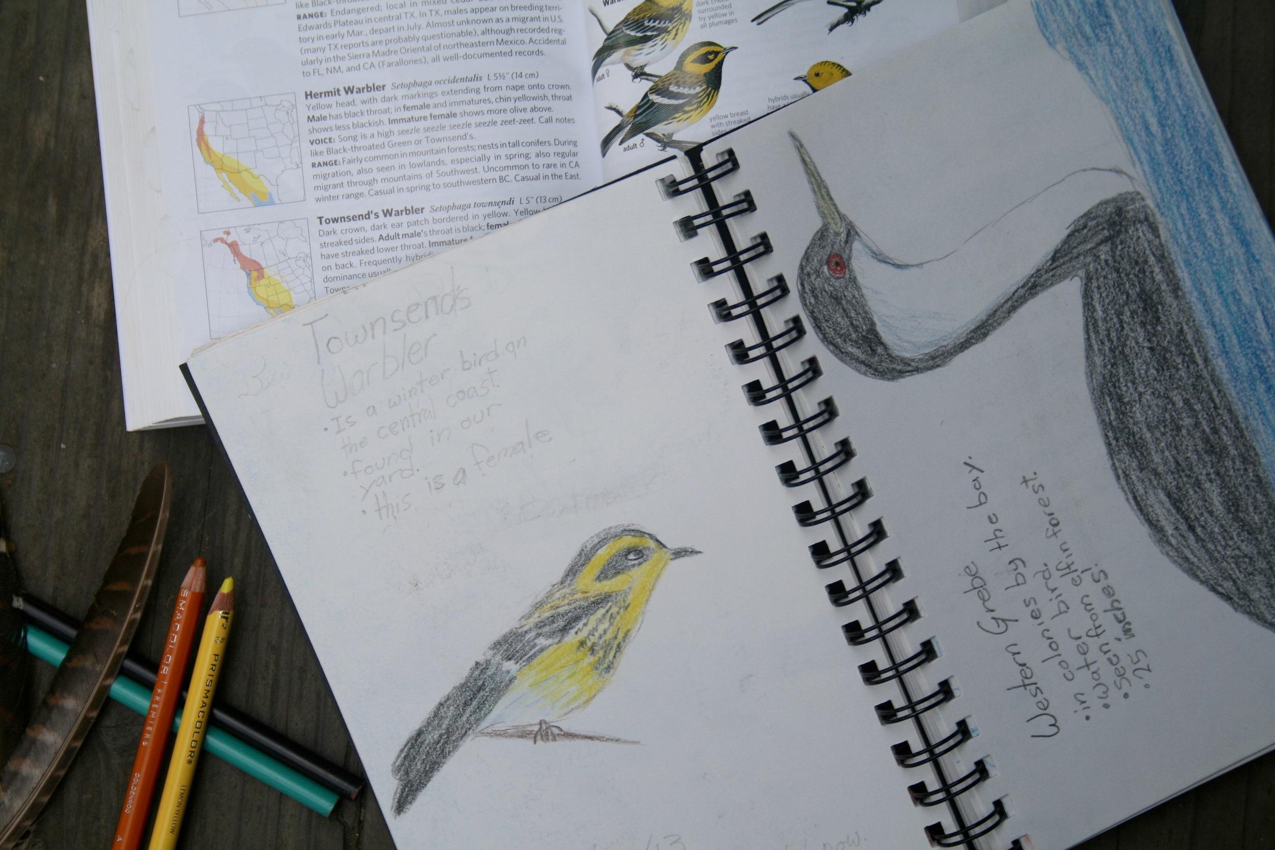 birdwatching homeschool journal