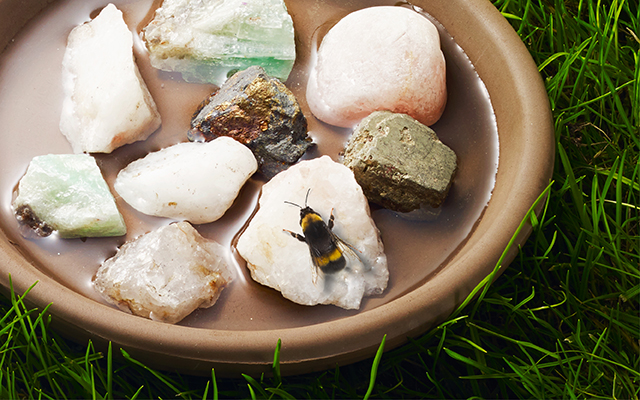 How-to-Make-a-Bee-Bath.jpg