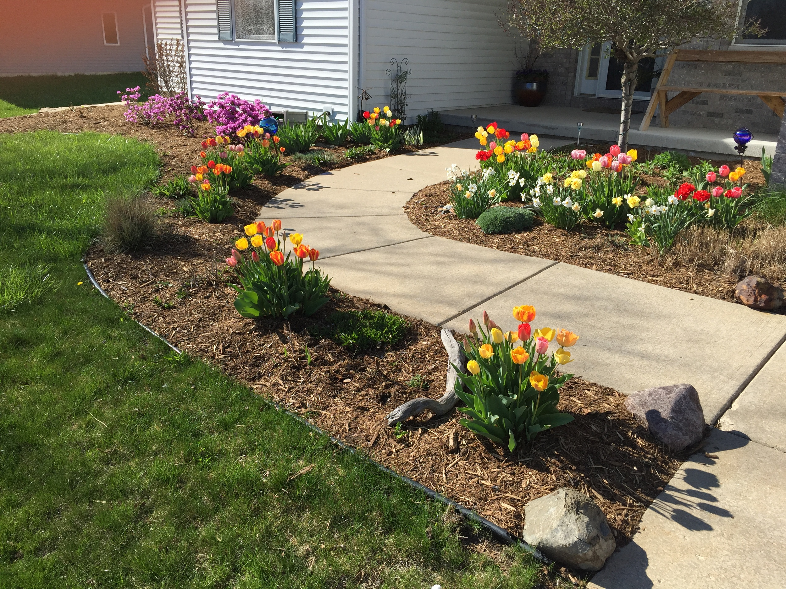 Plant bulbs in your planting bedslike Tulips and Daffodils in the fall for early spring color!