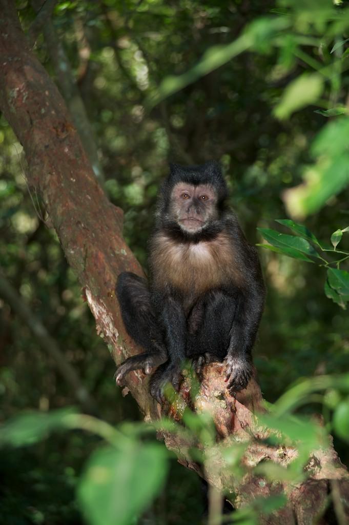 Monkey at Iguazu Falls #1, Argentina, 16 Apr 2012