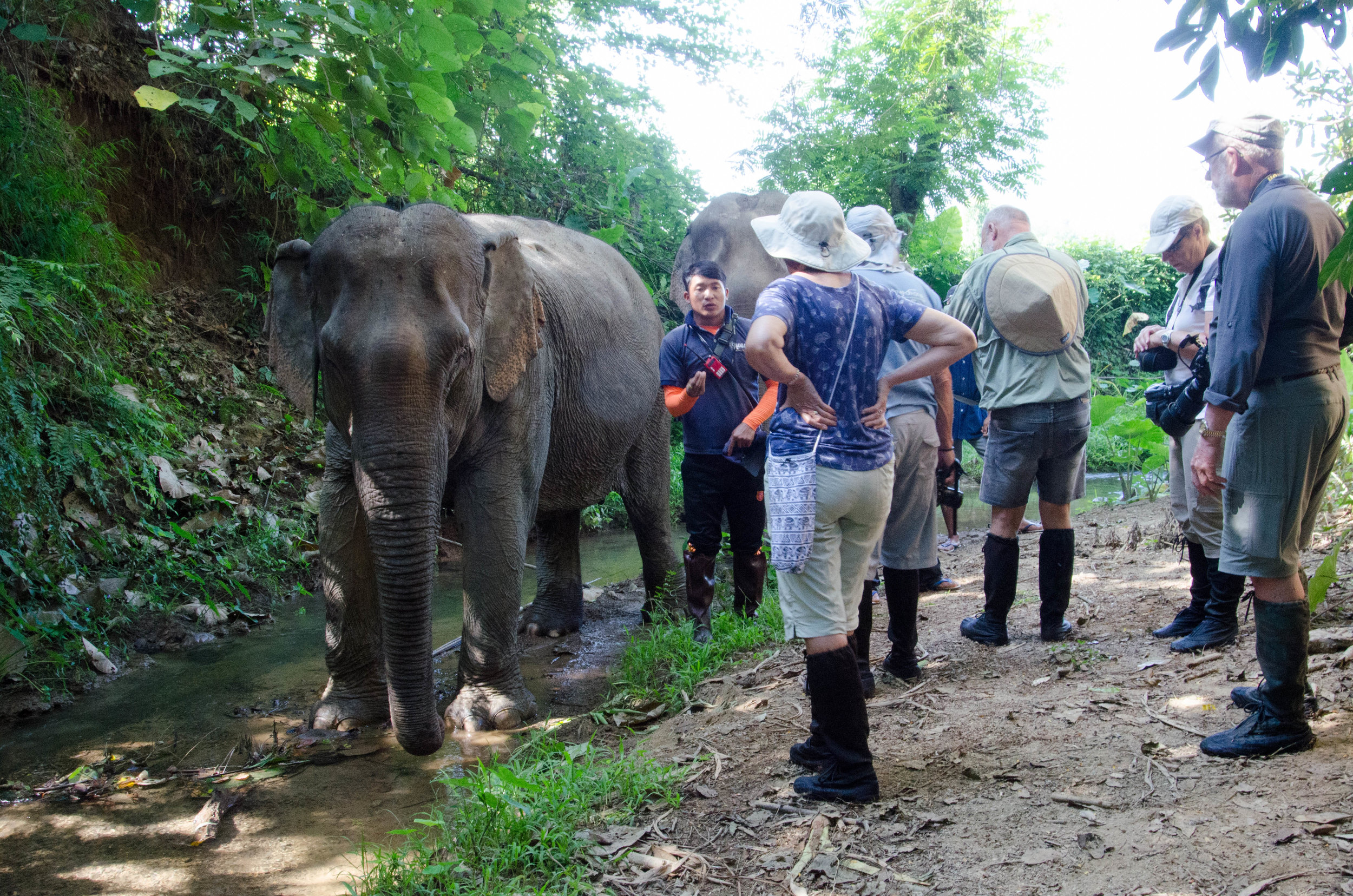 Group with elephants, MandaLoa Elephant Conservation Park, Laos, 2 Dec 2017.jpg
