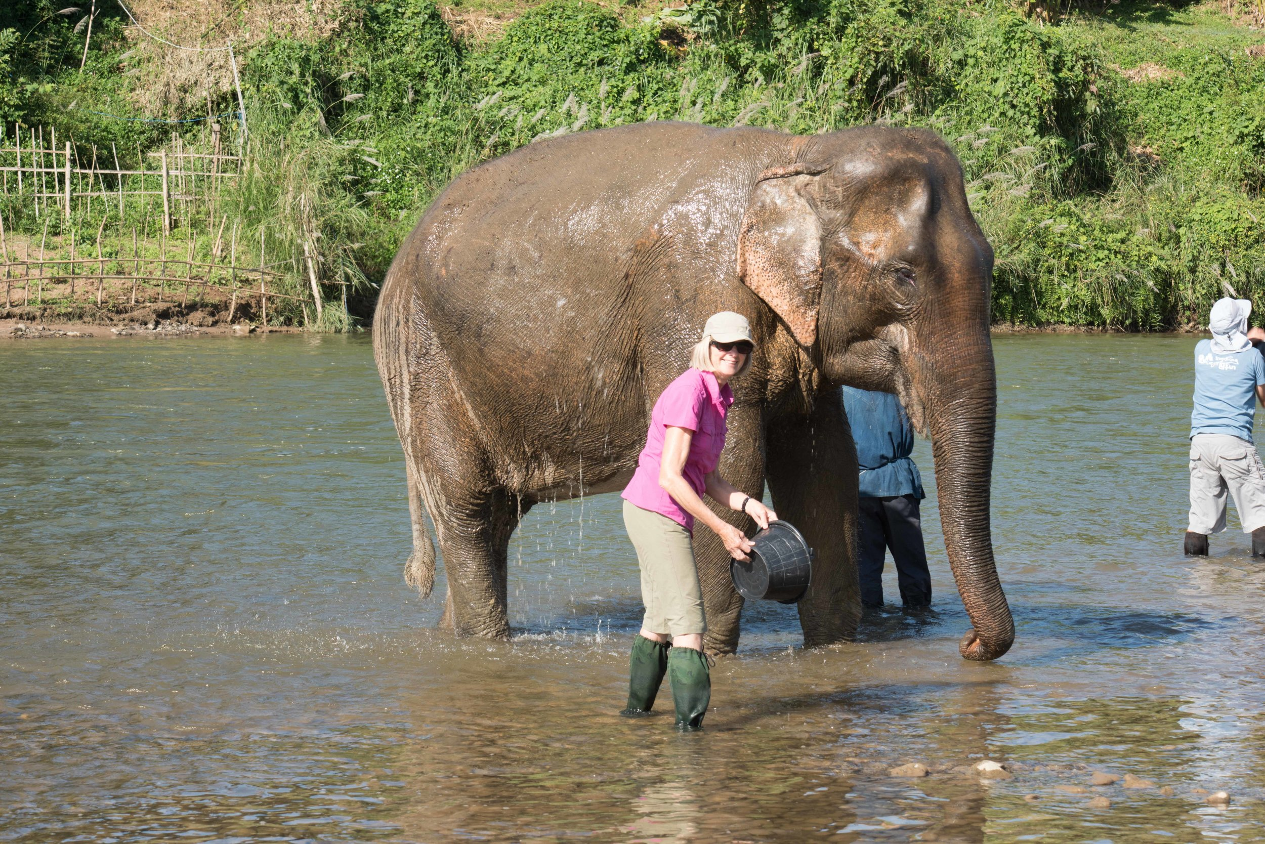 Corinne washing elephants, MandaLoa Elephant Conservation Park, Laos, 2 Dec 2017.jpg