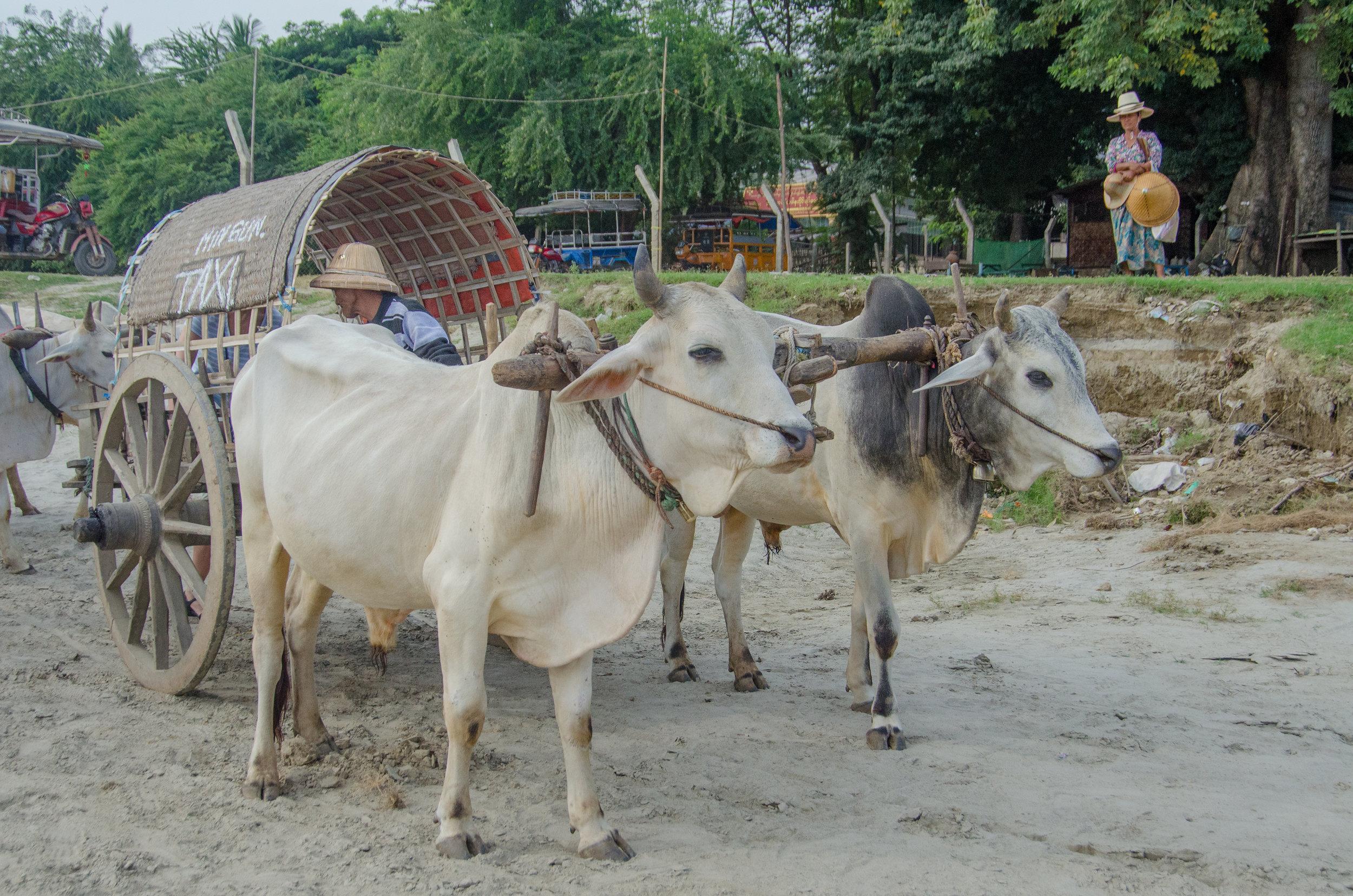 Ox taxi, Mingun, Mandalay, Myanmar