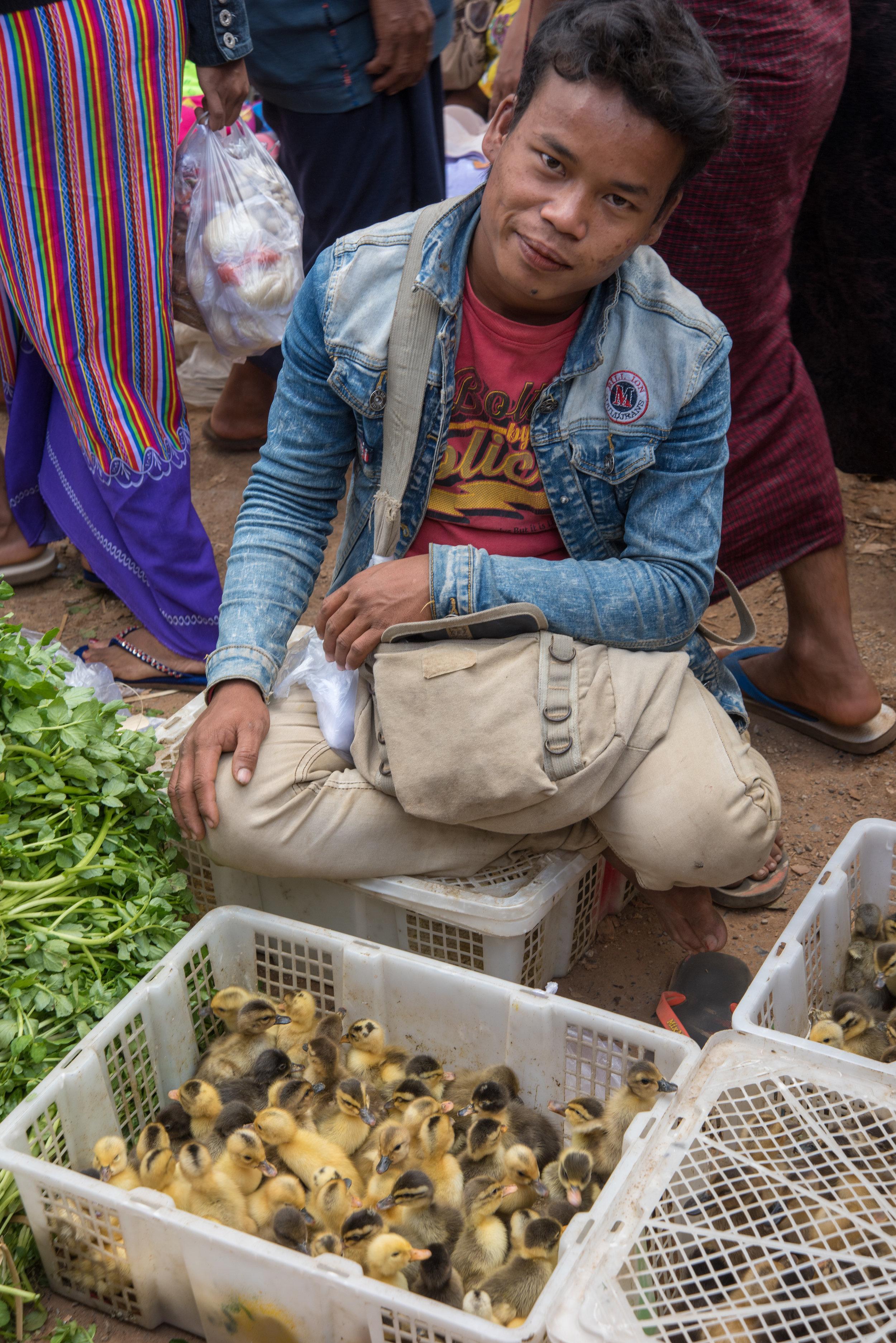 Ducklings, HeHo market, en route to Inle Lake, Myanmar