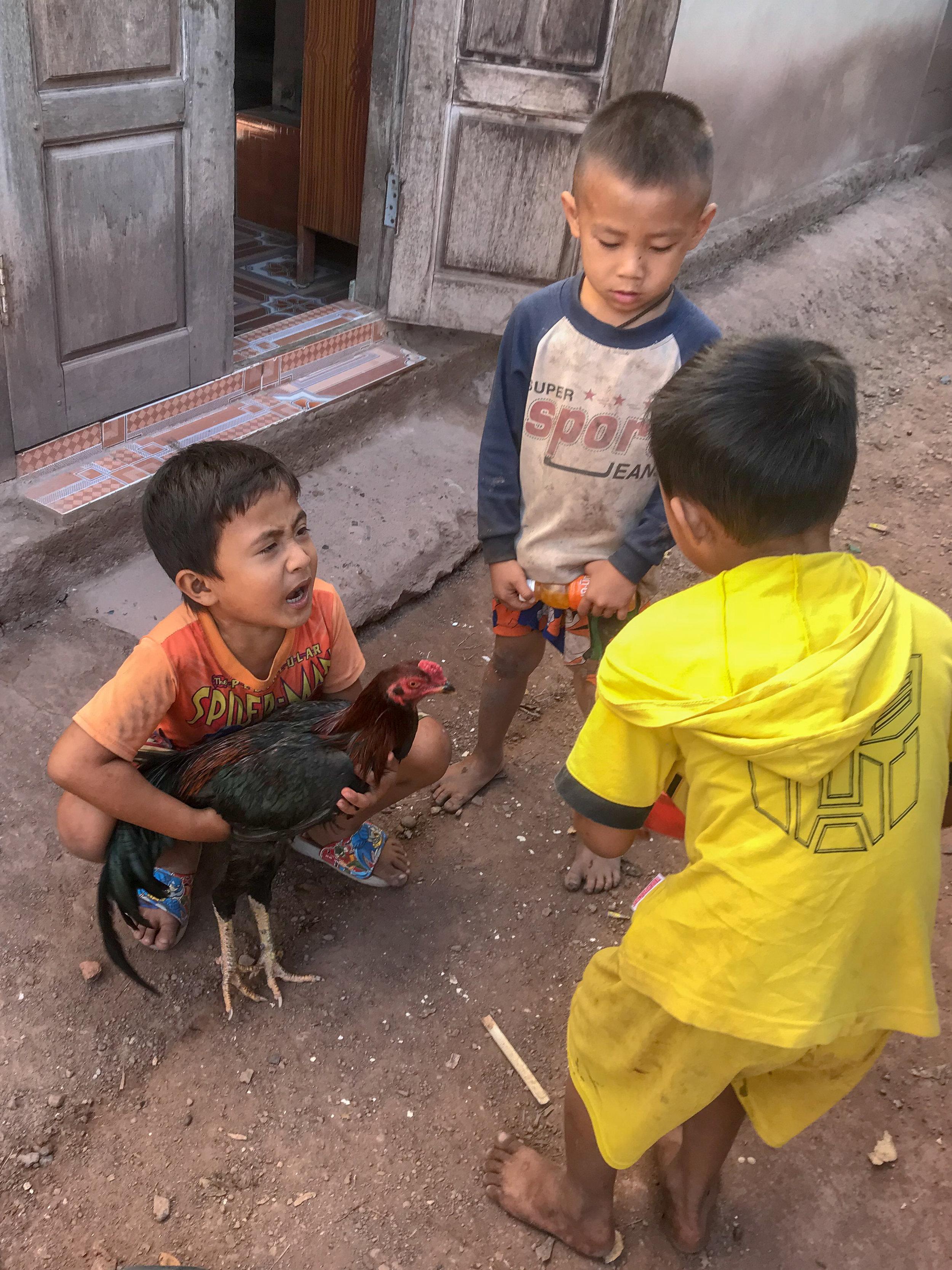 Children with fighting cocks, Ban Na Kham, Laos