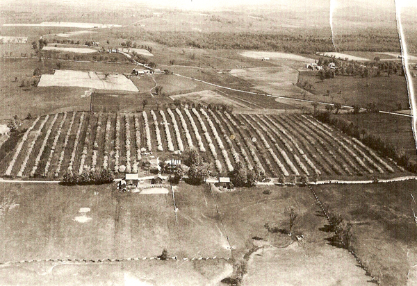 The early days of Champlain Orchards
