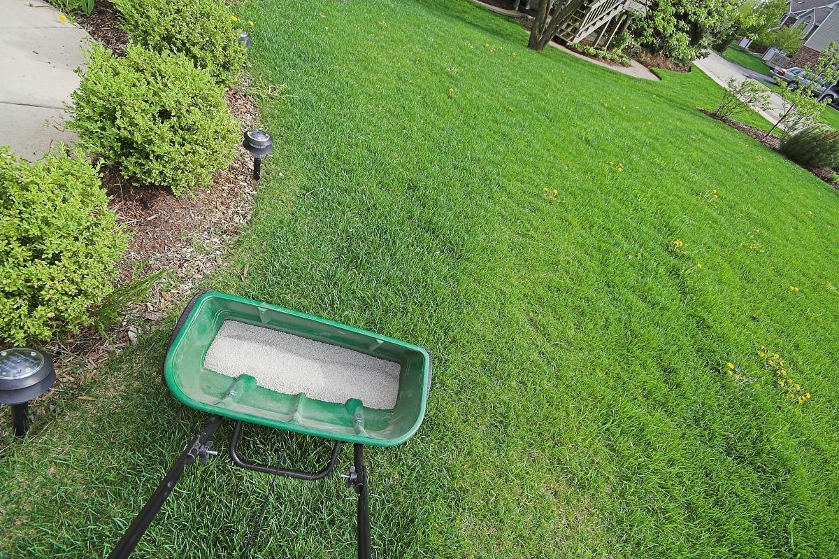 fertilization fertilizer lawn fertilizer services lawn care st louis st charles