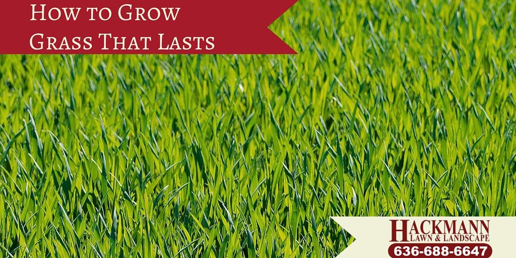 grow grass