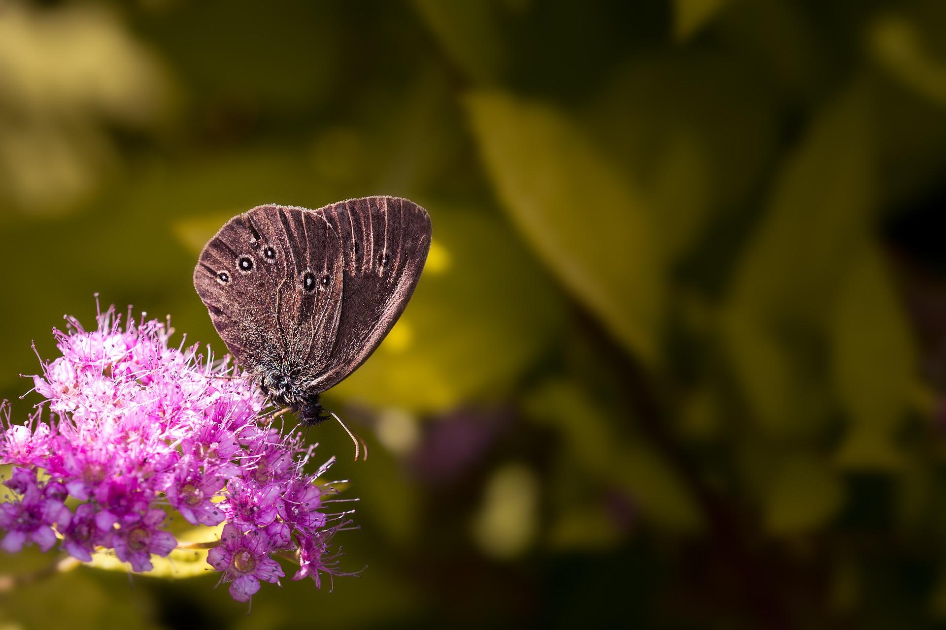 butterfly-1574762_1920.jpg