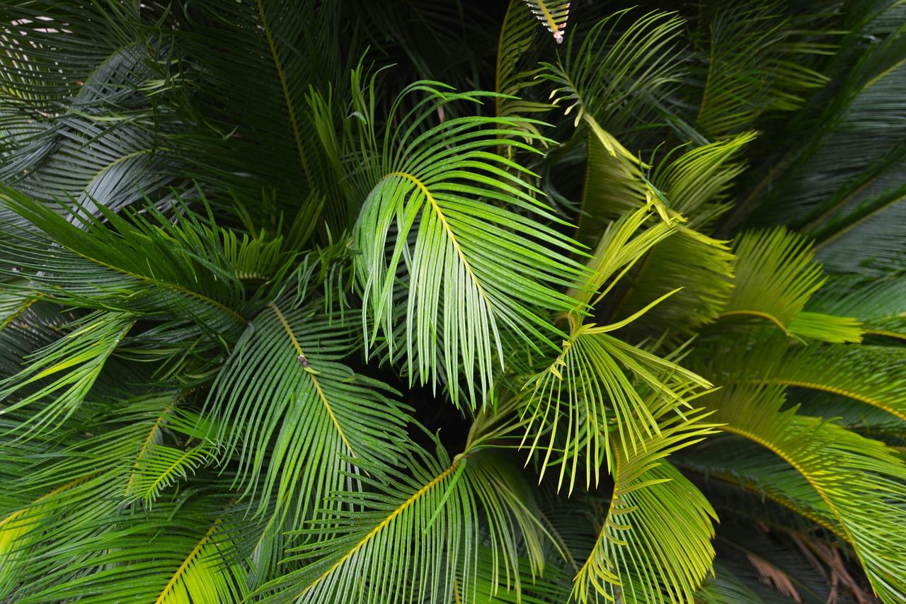 palm-leaf-1414462_1280.jpg