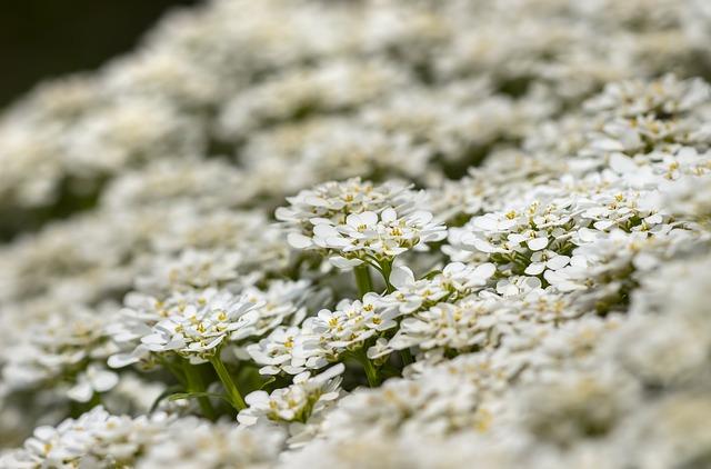 flowers-3357356_640.jpg