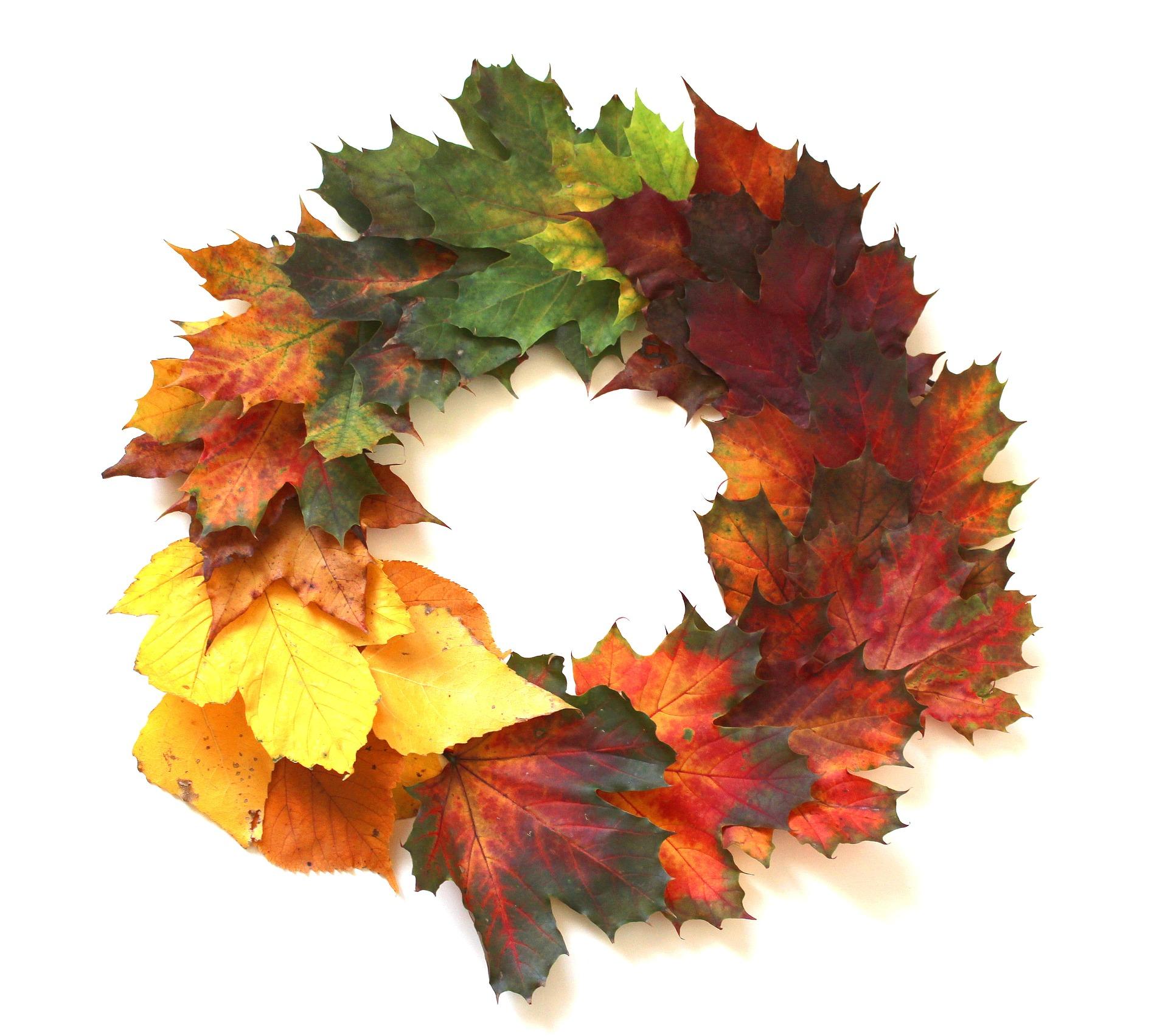 leaves-2854366_1920.jpg