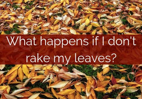 leaf removal