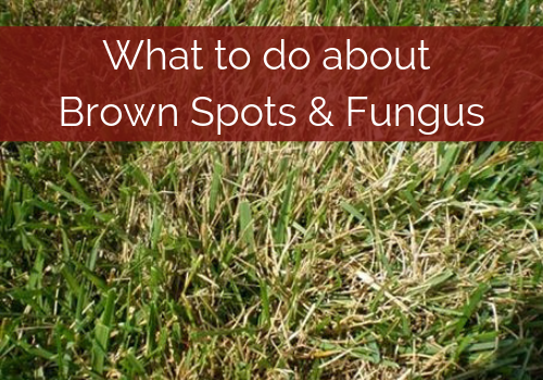 brown-spots-lawn.png