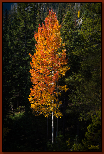 """Aspen"" ©2016 Jon S. Berndt    Sometimes a single tree by itself makes an impressive color ""statement."" Although ... this one wasn't completely by itself in this photograph. To see a larger version and for purchase options,  click here ."