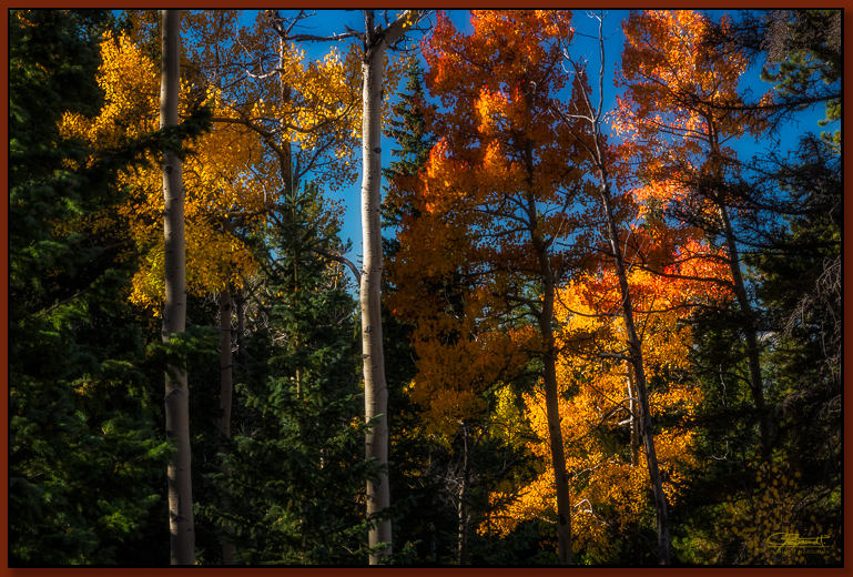 """Forest Afire"" ©2016 Jon S. Berndt   The colorful leaves almost make it seem as if the forest is afire with crimson, orange, and yellow."