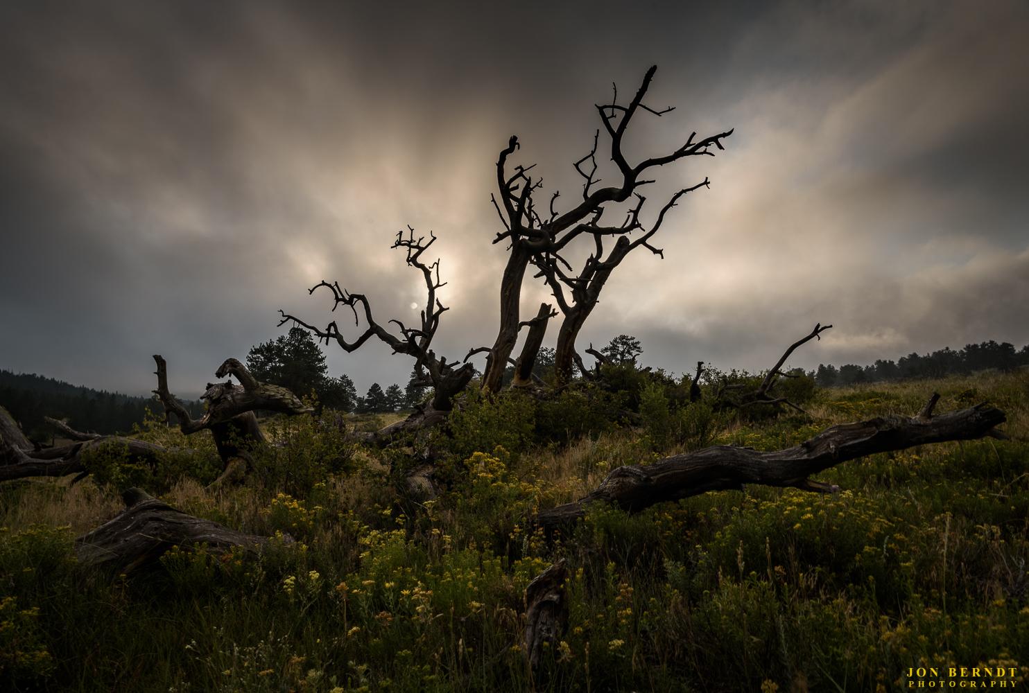 Spooky scene under a blanket of fog in RockyMountain National Park.(C) 2017 Jon Berndt Photography