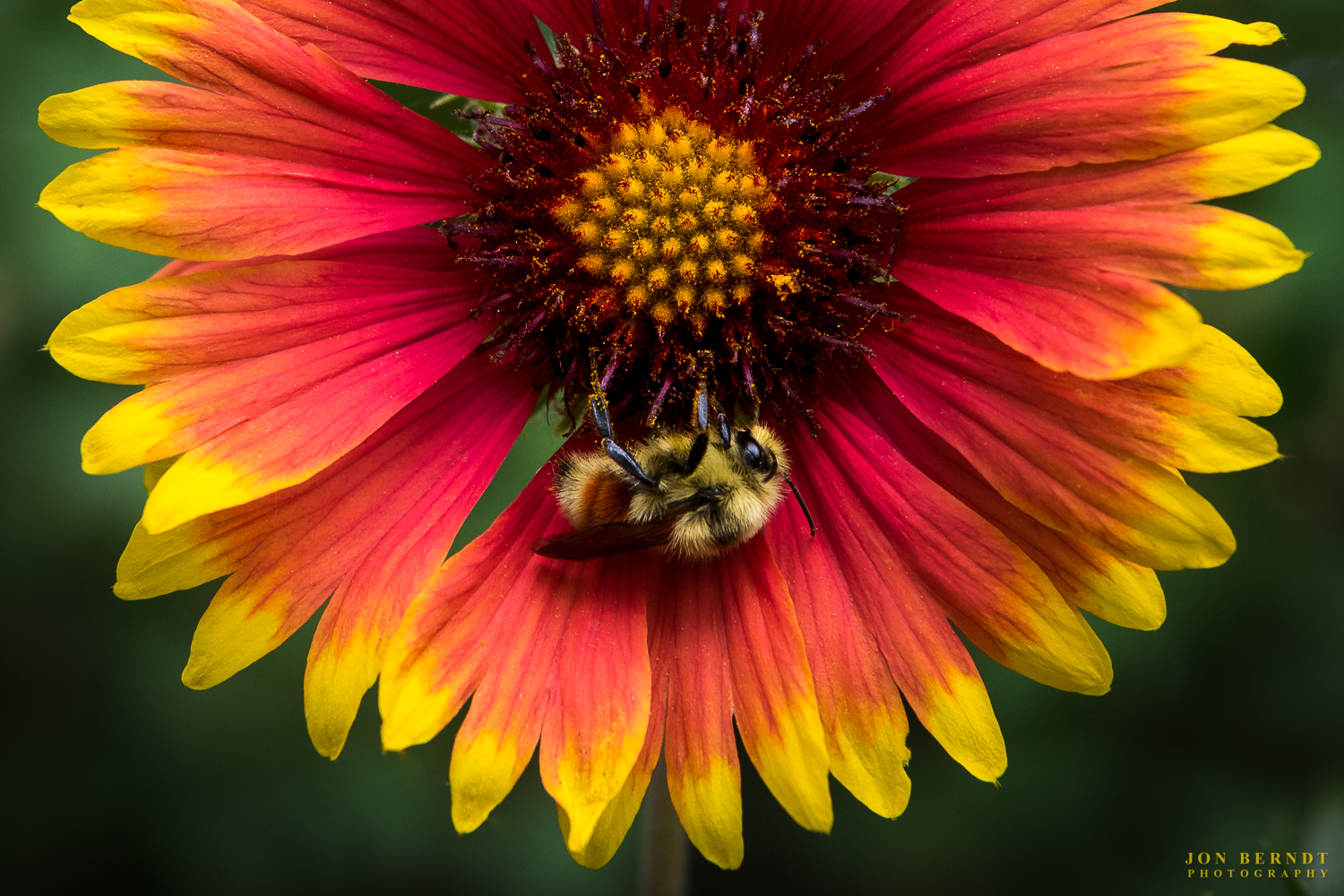 Firewheel and Bee