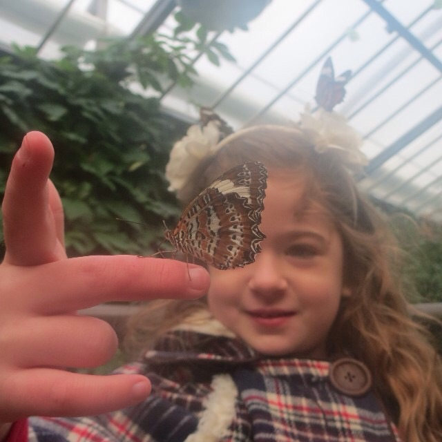 8. The Butterfly House, Melbourne Zoo  A glasshouse full of butterflies is pretty remarkable. Wear bright colours and try to sit or stand still to make some new friends. It's a fantastic spot to hang out on on cold day as it's always warm and humid in there.