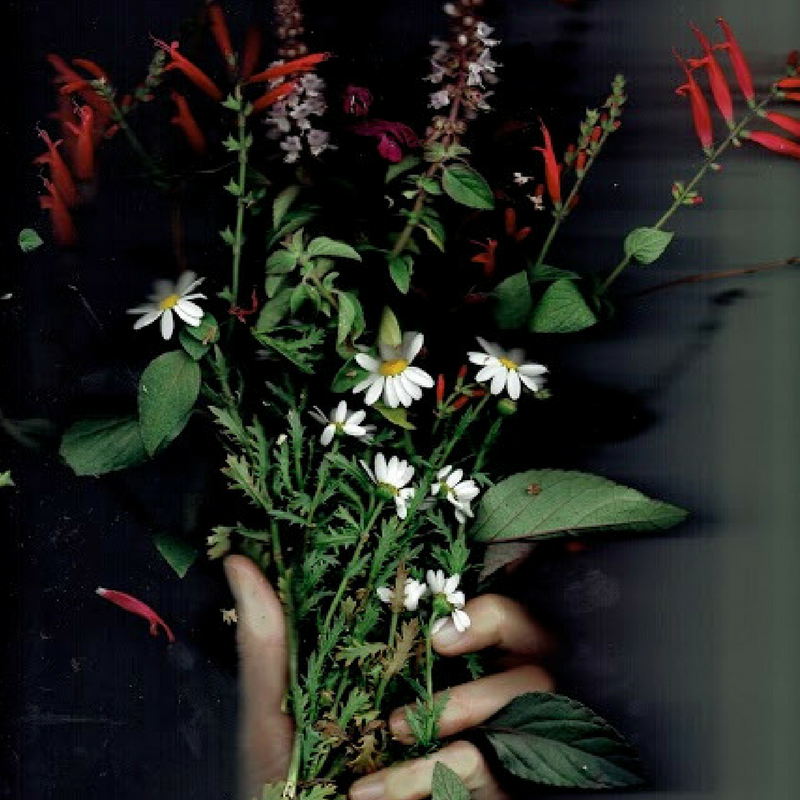 flowers_sq.png