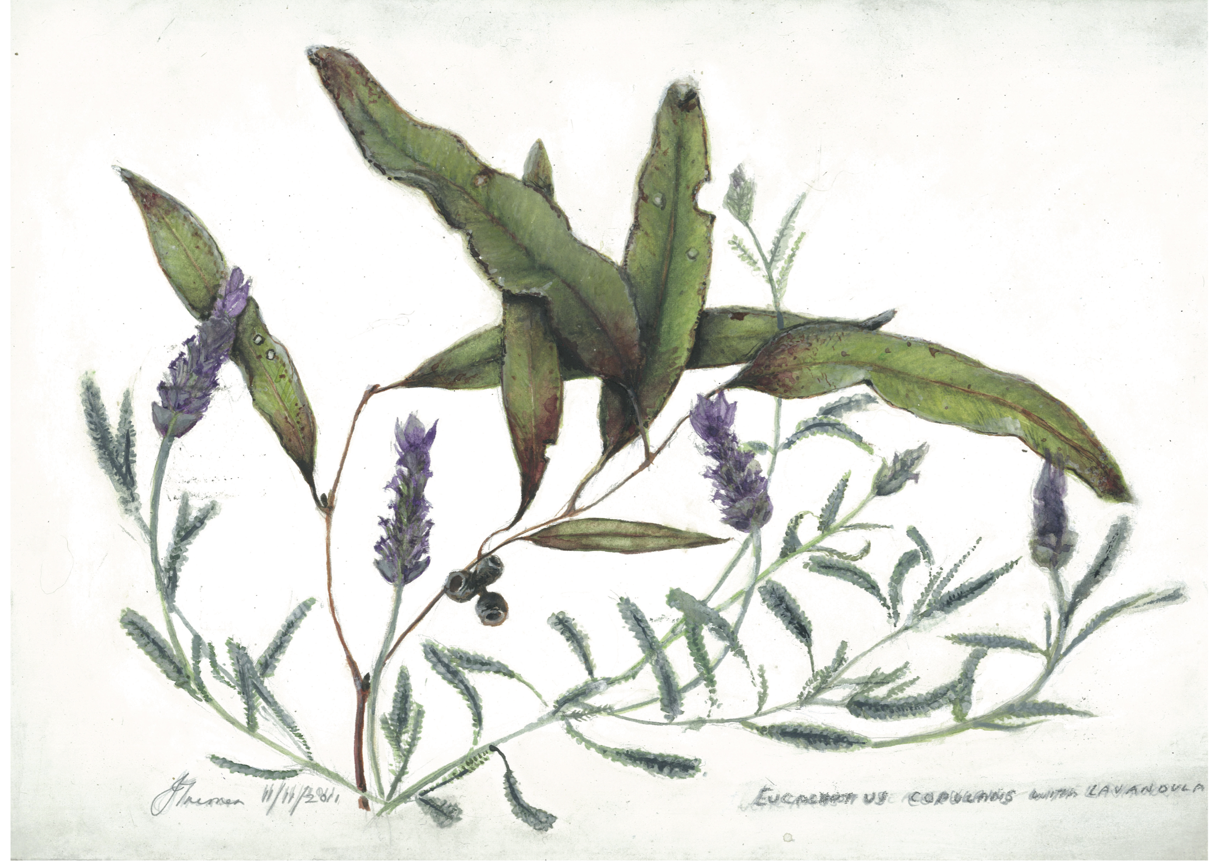 Lavender and Gum leaves no 1 A3 size.jpg