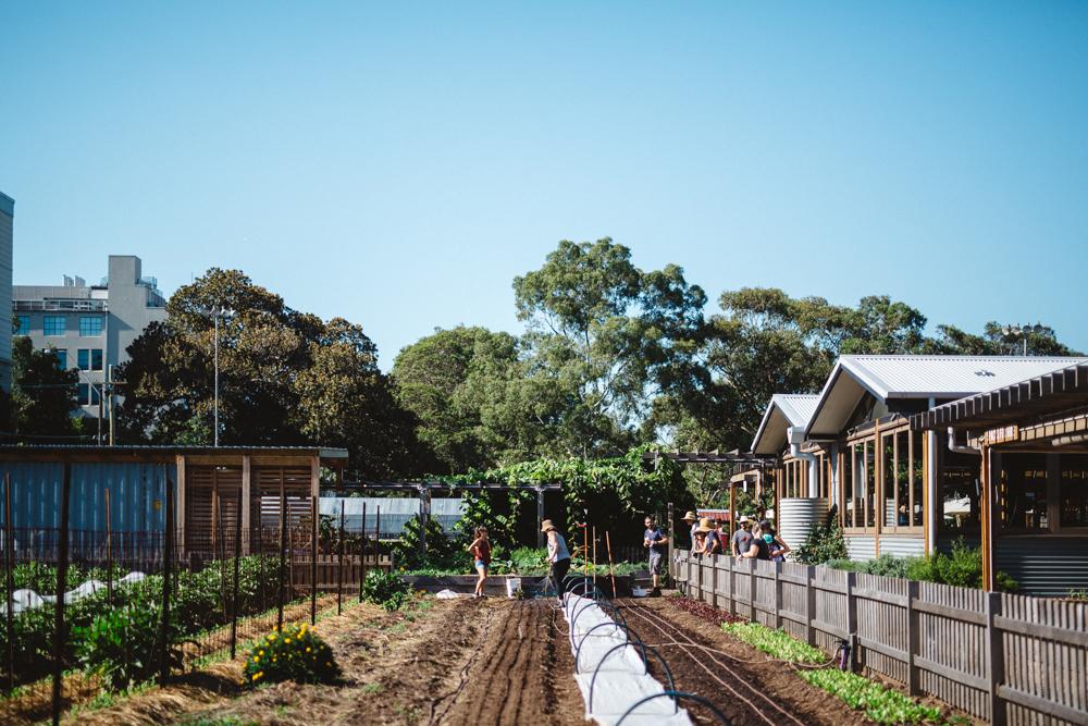 Pocket City Farm_by_Luisa Brimble_1342.jpg