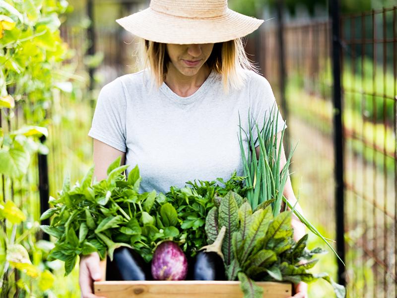 The Organic Veggie Garden.jpg