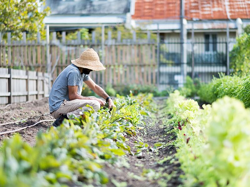 The Urban Farmer Life 2.jpg