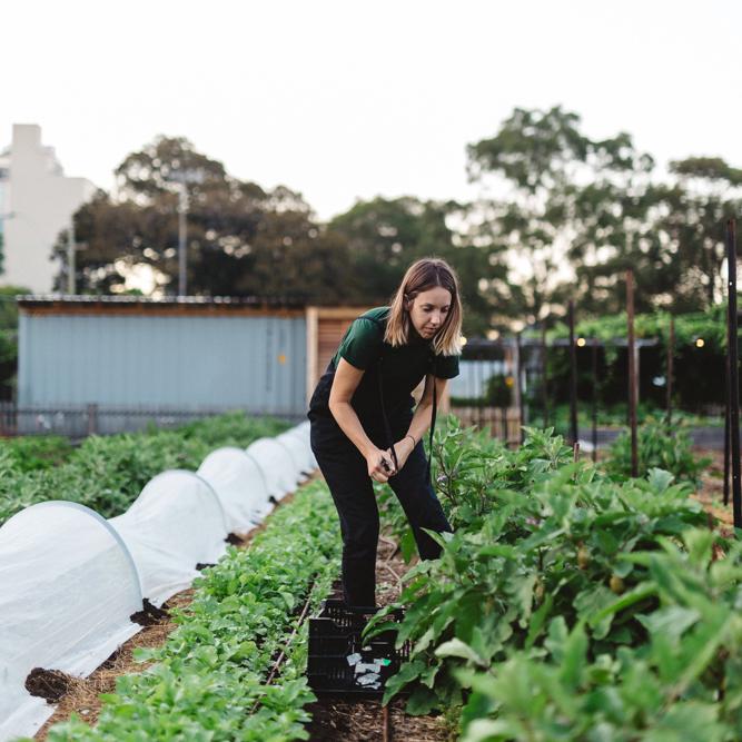 Pocket City Farm_by_Luisa Brimble_1092-sq.jpg