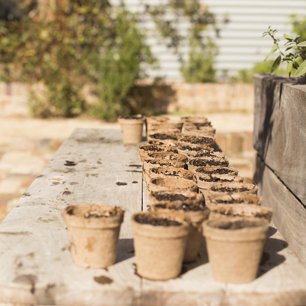 pocket-city-farms-seed-raising-sq.jpg