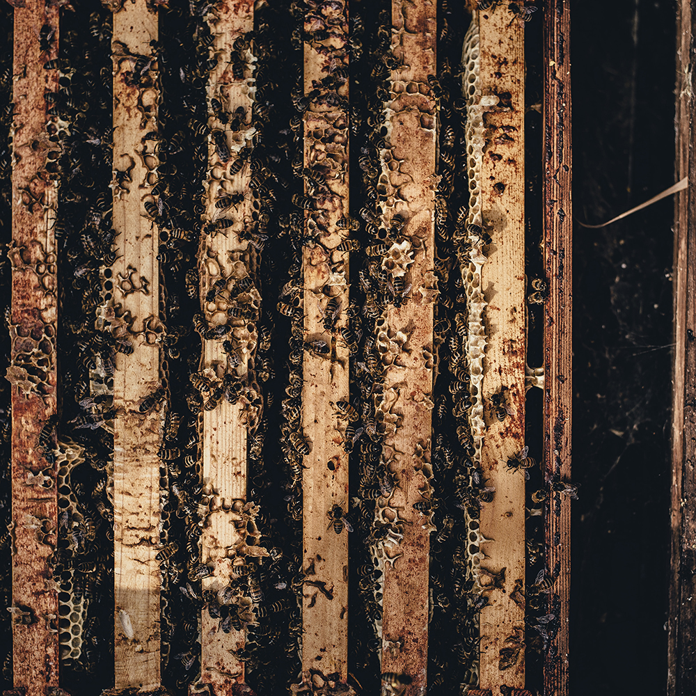 pocket-city-farms-intro-backyard-beekeeping4-sq.jpg