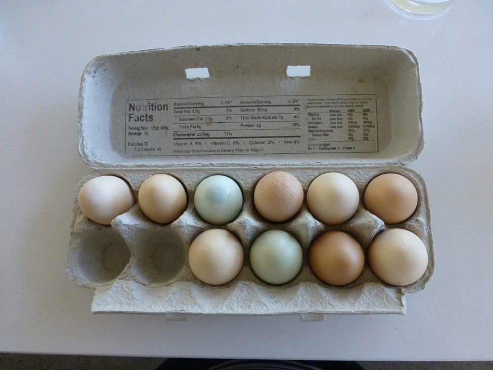 Fresh eggs for breakfast from the farm down the road.  We learned that the color of the egg is specific to the chicken's breed.