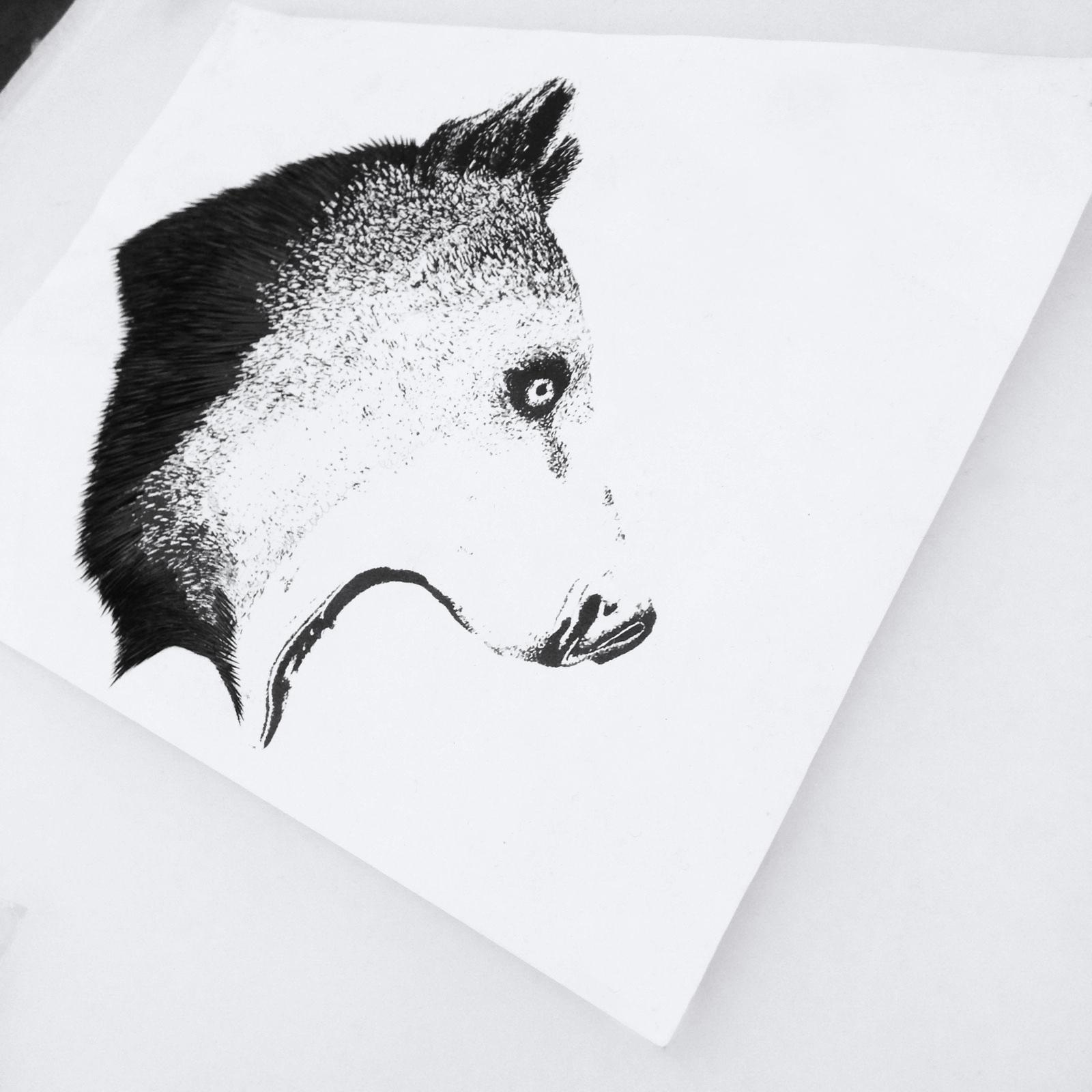 SaccoBaret_Drawing_Bears.jpg