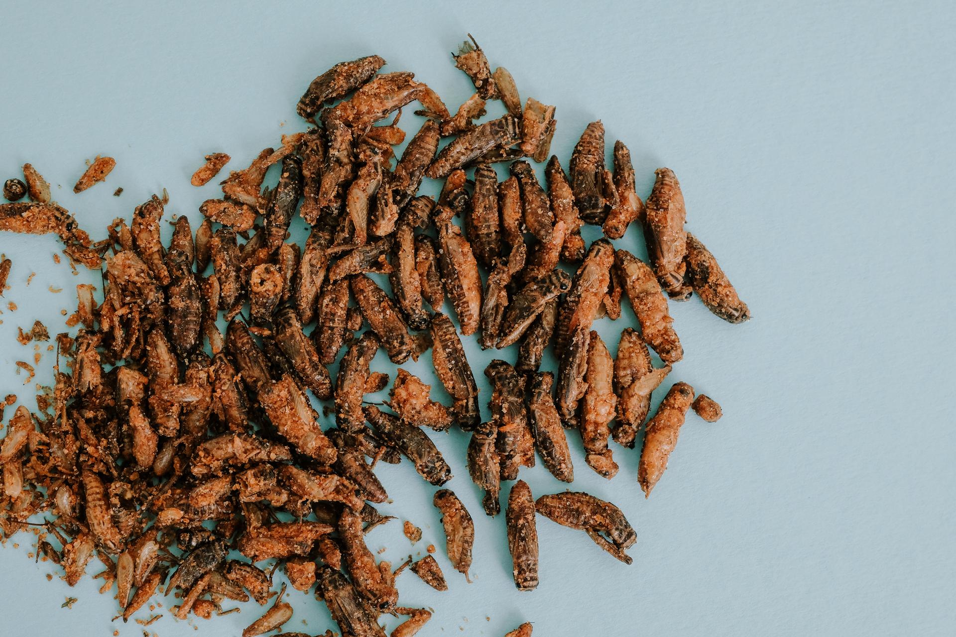 Eat Grub's Crunchy Roasted Crickets.