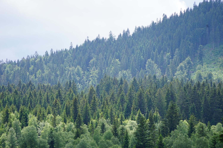 sabina_abdulajeva_forest.JPG